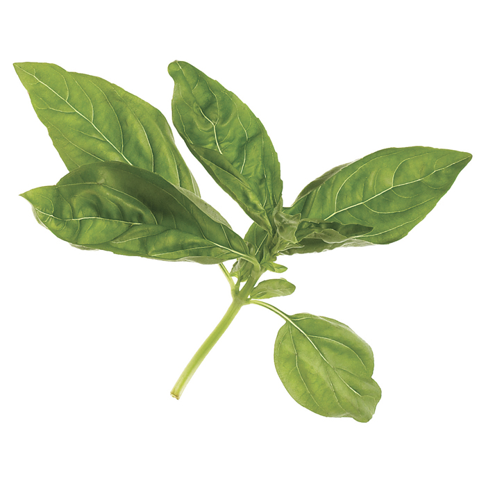 Sweet basil traditional