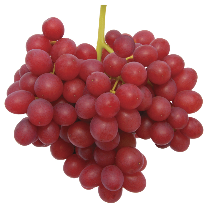 how to grow grapes from seedless grapes