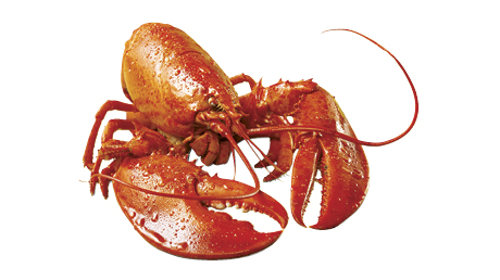 It's officially lobster season! | Fish and seafood ...