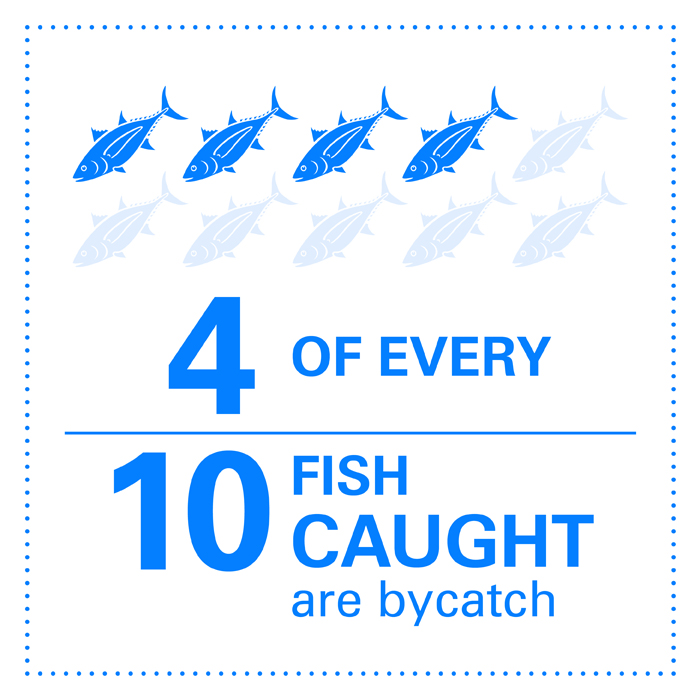 4 of every 10 fish caught are bycatch