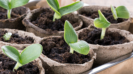 5 steps to successful seedlings and an abundant home garden